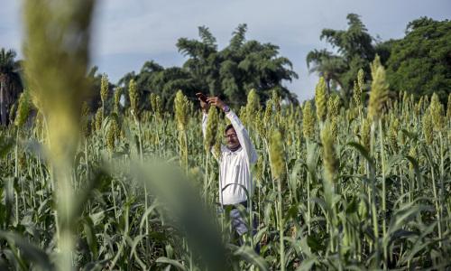 A worker performs geo-tagging in a corn field in Guna, India.